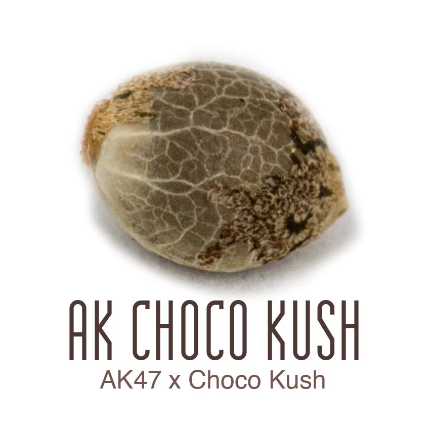 AK Choco Kush zaadje