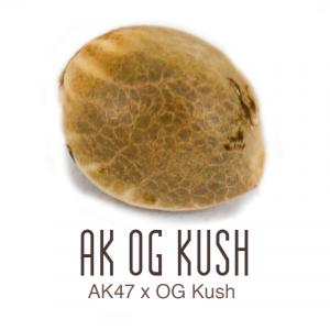 AK OF Kush zaad