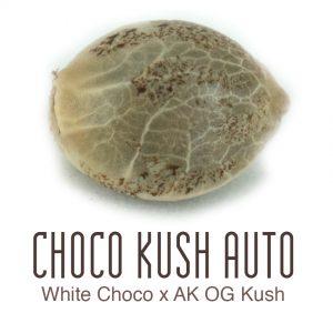 Choco Kush autoflower wietzaad