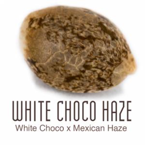 White Choco Haze wietzaad