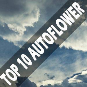 Top 10 autoflowering