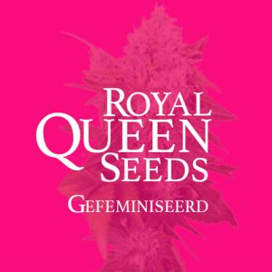 Royal Queen Seeds Gefeminiseerd