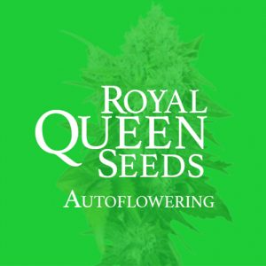 Royal Queen Seeds Autoflowering