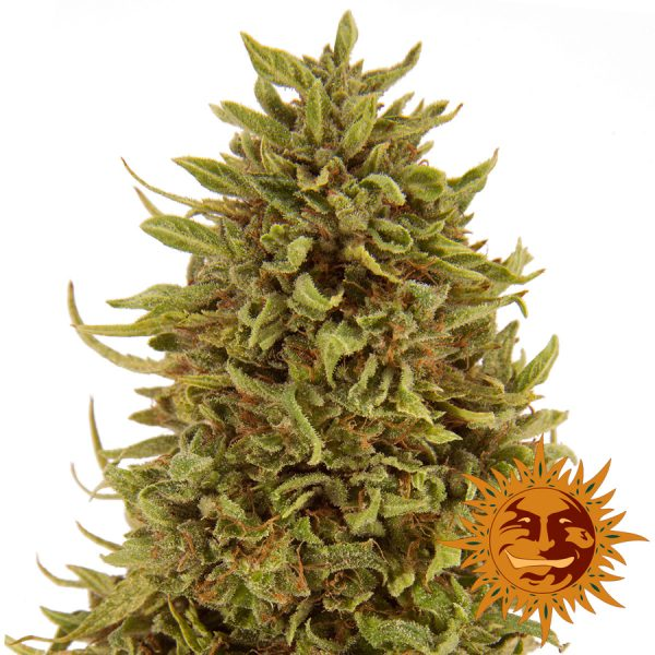 large_pineapple-express-auto_1_057246